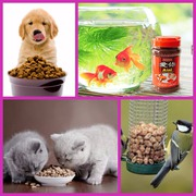Dog Accessories Online - Low Prices on Popular Products,  india