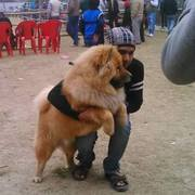 7352994017 for any kinds of dogs's puppies in ranchi