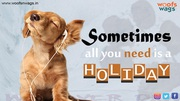 Best Online Pet Supplies Store in India   Woofsnwags.in