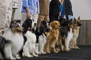 Popular Dog Trainers and Handlers in Town
