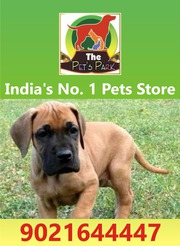 THE PETS PARK - TOP QUALITY DOG PUPPIES -9021644447